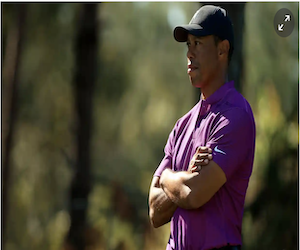 The lead stalks Tiger (The Guardian)